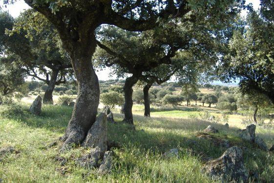 Extremadura: la región del jamón