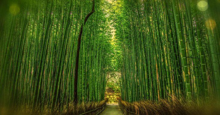 Paseo para ir en bici por Kyoto (Pixabay)