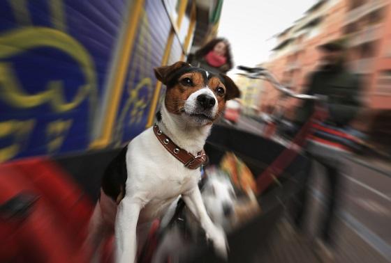 Amsterdam es una ciudad en la que se permite la entrada a los perros en el transporte público, tiendas y restaurantes