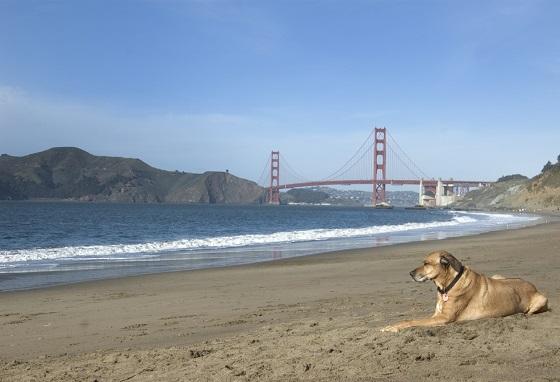 San Francisco, una de las ciudades más pet-friendly del mundo