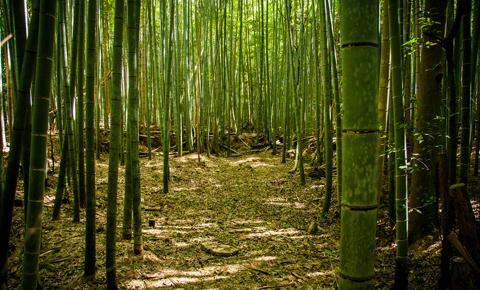 Bosques_destacada