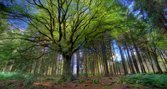 Broceliande / Philippe Manguin Photographies/Getty Images