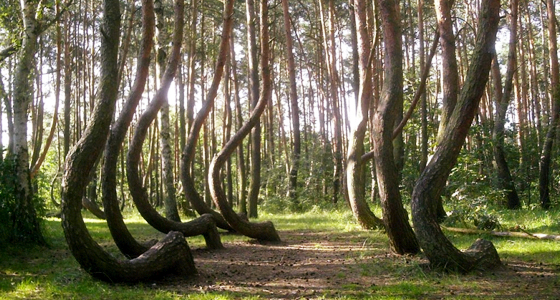 Crooked Forest / Foto: Asbb