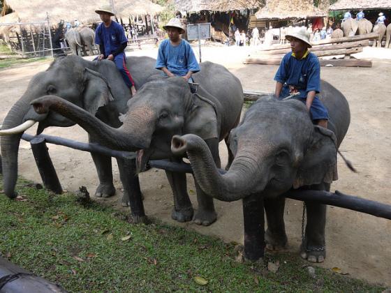 elefante tailandia