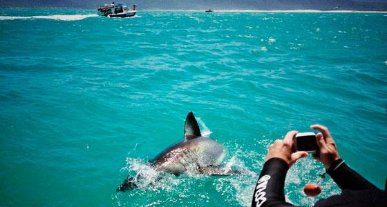 Avistamiento de tiburones blancos en Gansbaai (Sudáfrica). / Foto: kcakduman