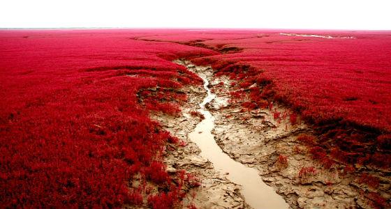 playa-roja-panjin