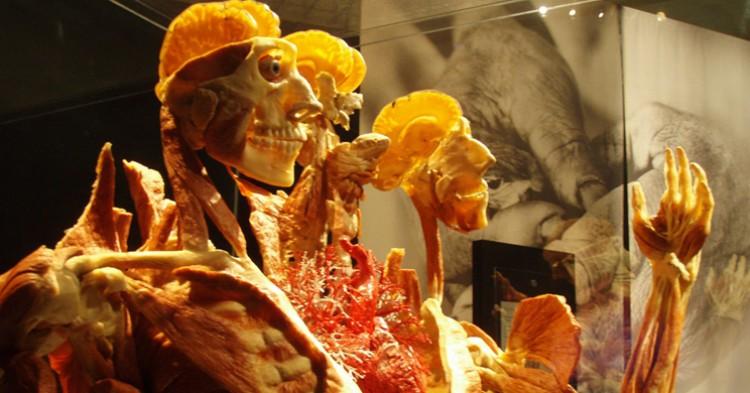 Uno de los cadáveres de la muestra - Steve & Michelle Gerdes, Flickr