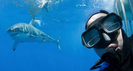 Tiburones / Foto: Peter Verhoog