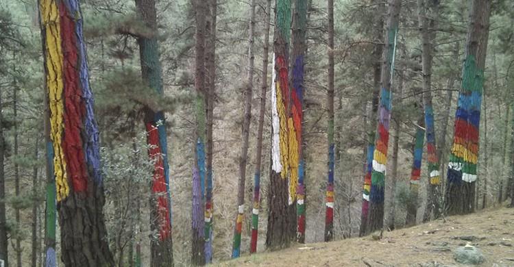 El Bosque de Oma representa la relación del ser humano y la naturaleza. (Flickr)