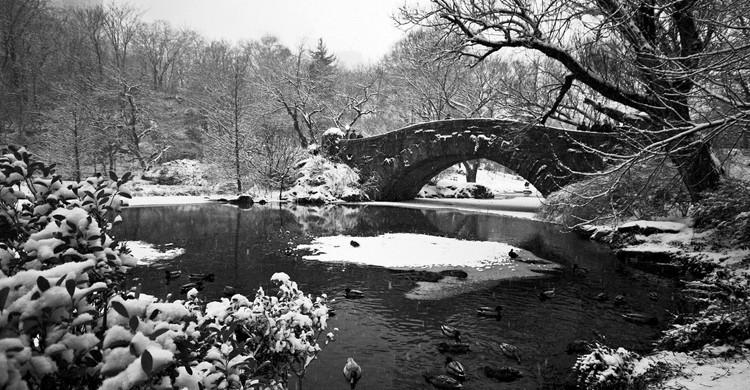 Central Park esconde muchos secretos, como un santuario con varias especies. ( A. Strakey, Foter)