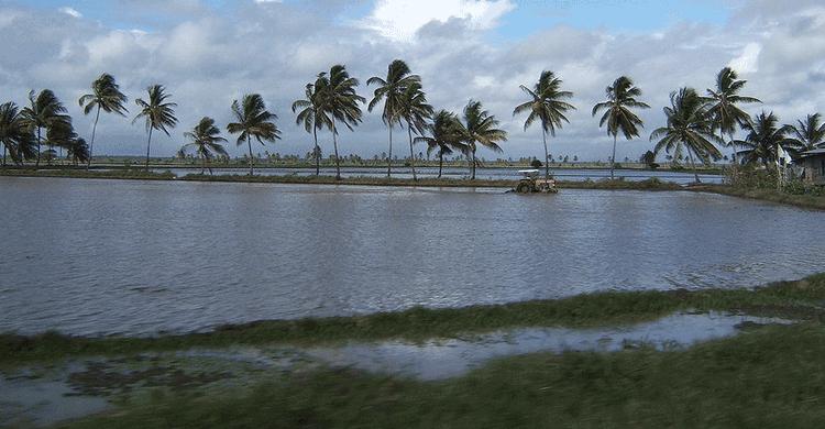 Guayana Francesa (wikipedia)