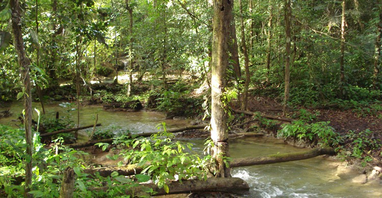 Selva Lacandona (Istock)