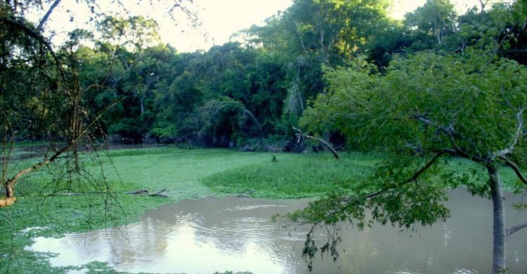 Río en el parque de Formosa. Matías Carpinetto (http://www.parquesnacionales.gob.ar/)