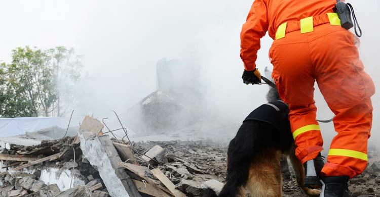 Los perros de las unidades especiales son fundamentales en los rescates tras un terremoto (iStock)
