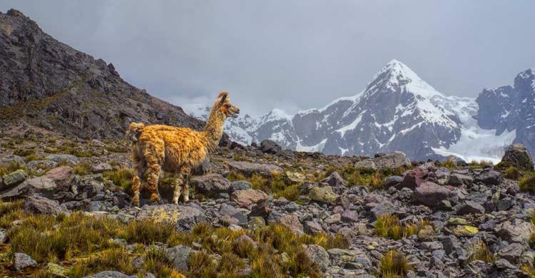 Ausangate es una montaña sagrada para la comunidad andina (iStock)