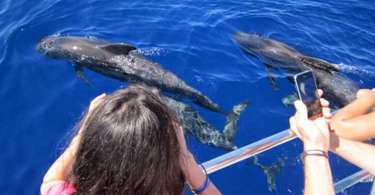 El precio de los minicruceros de Canarias World es de 27 euros (canariasworld.com)