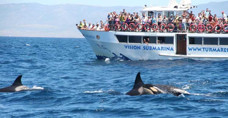 Tarifa es otro lugar destacado para el avistamiento de cetáceos (turmares.com)