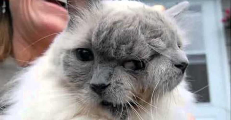 Gato con dos caras (YouTube)