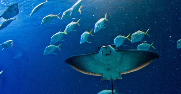 El Oceanogràfic, una visita imprescindible en Valencia (iStock)