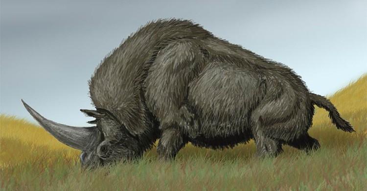 Dibujo del Elasmotherium sibiricum o rinoceronte siberiano