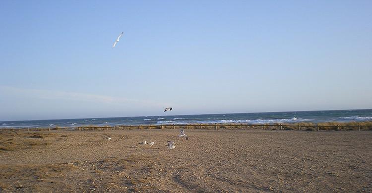Vistas de la playa de Torregarcía, Retamar