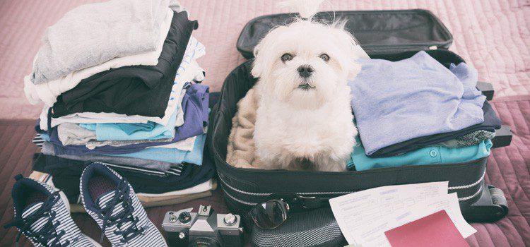 viajando con perros en verano