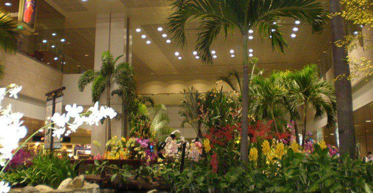 La decoración a base de de árboles y plantas es característico en el aeropuerto de Changi (Fuente: Jason Thien / Flickr)