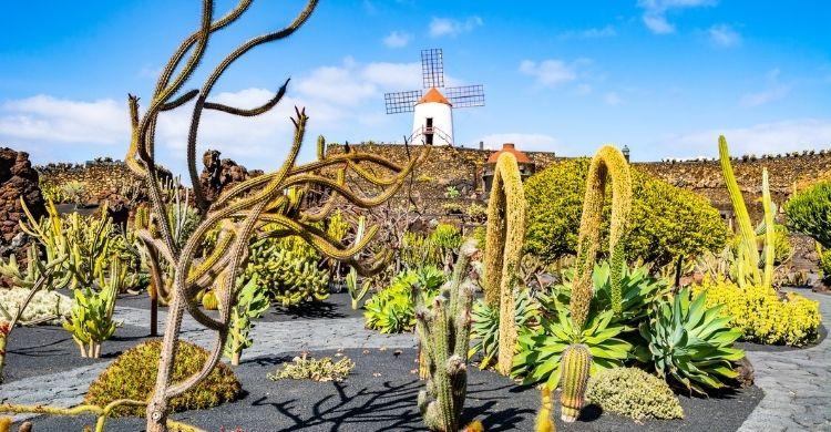 Jardín de Cactus (iStock)