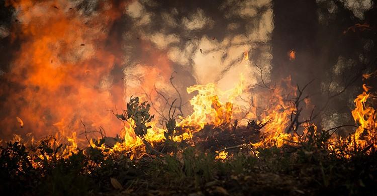 Un incendio arrasa un bosque
