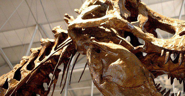 ¿Aún no has visto al Tyrannosaurus Rex? (Fuente: Kabacchi / Flickr)