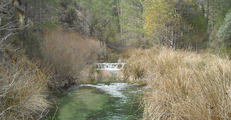 Vegetación variada durante la ruta del Río Ebrón (Fuente: vitaka / Flickr)