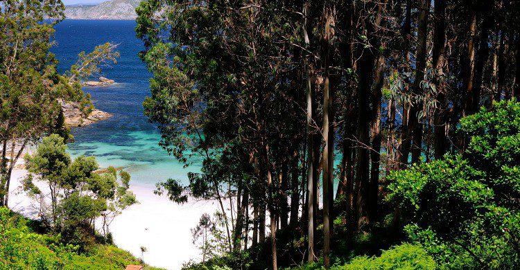 Playa de Figueiras en Pontevedra, Galicia (Fuente: iStock)