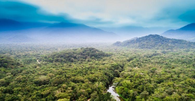 El bosque del Amazonas (iStock)